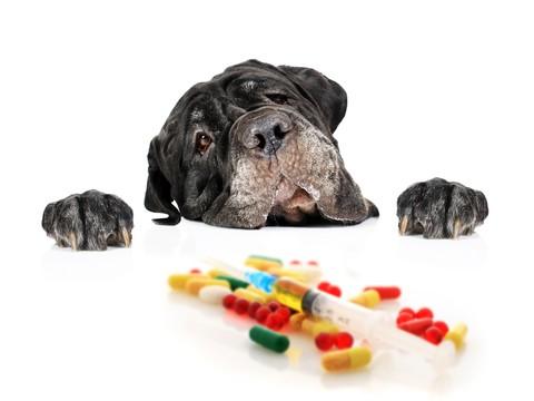 Jakie ludzkie leki można podać kotu lub psu? Leki z apteki dla zwierząt, leki weterynaryjne